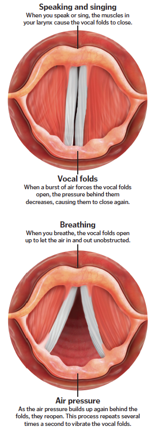 Singing science: Why do some people have better voices than others