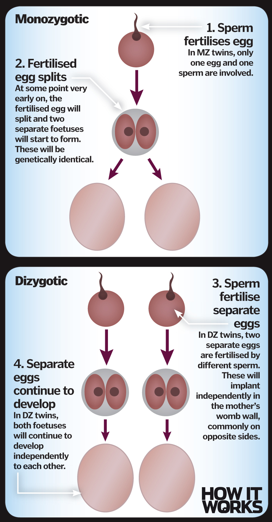 What are twins? – How It Works