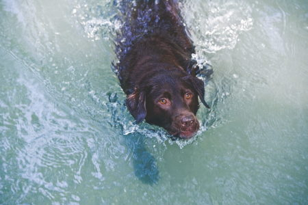Munich, Germany --- Dog swimming in water --- Image by © Daniel Reiter/Stock4B/Corbis