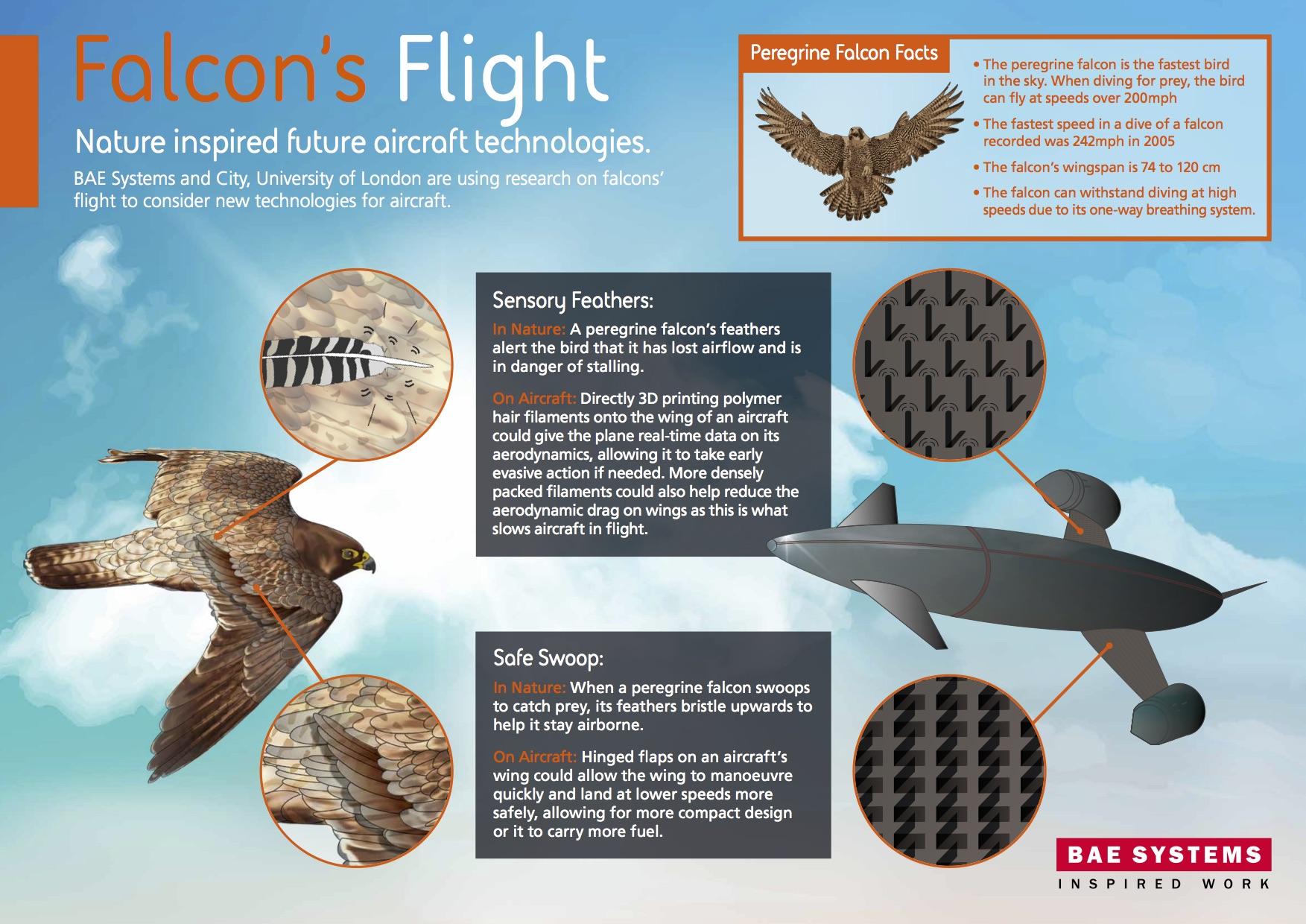 Nature Inspired Aircraft
