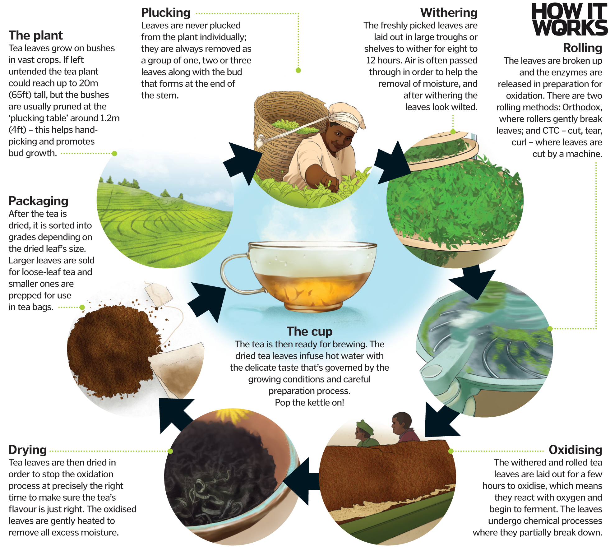 Where Does Tea Come From How It Works