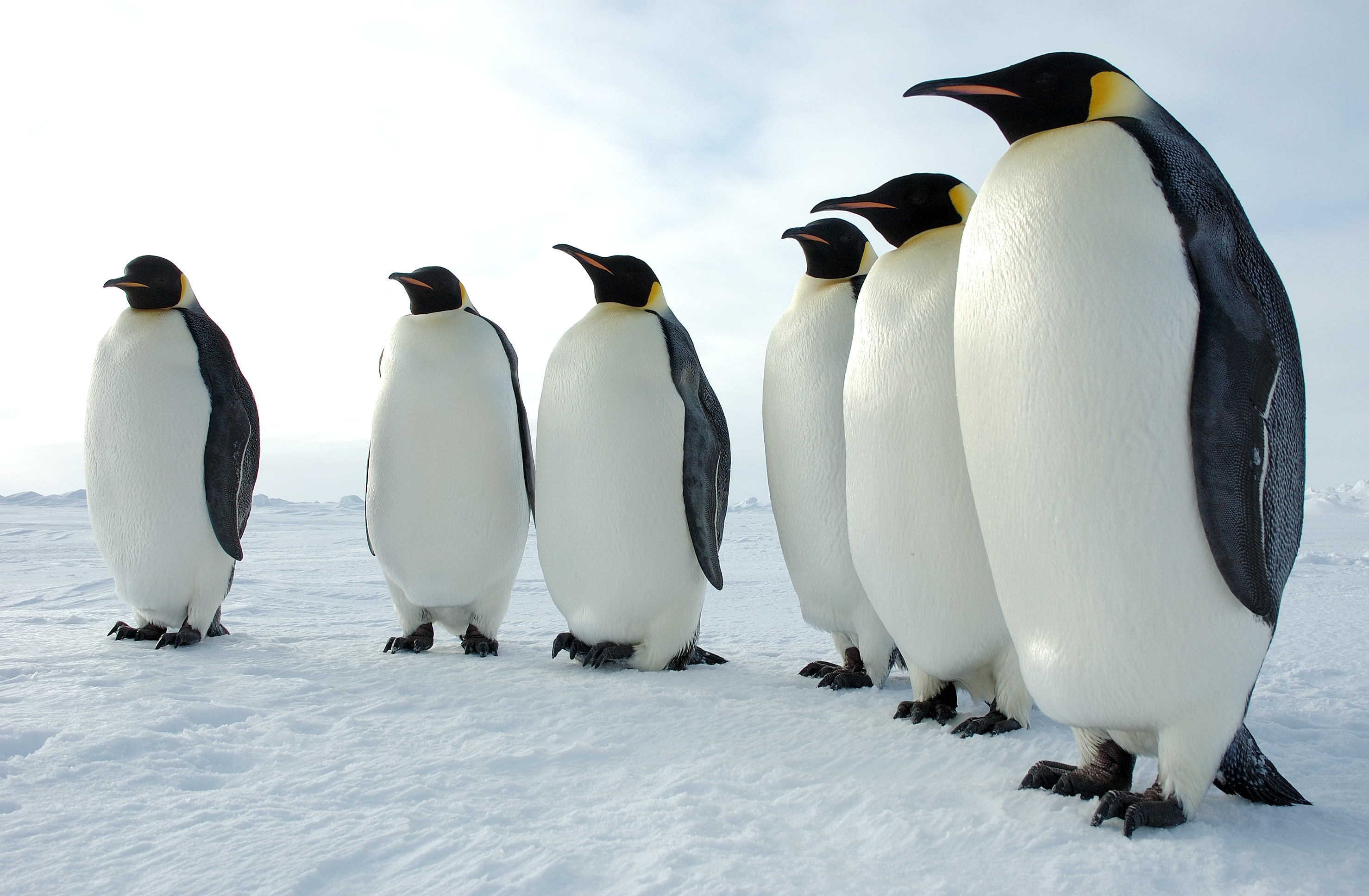 why do penguins only live in the southern hemisphere how it works
