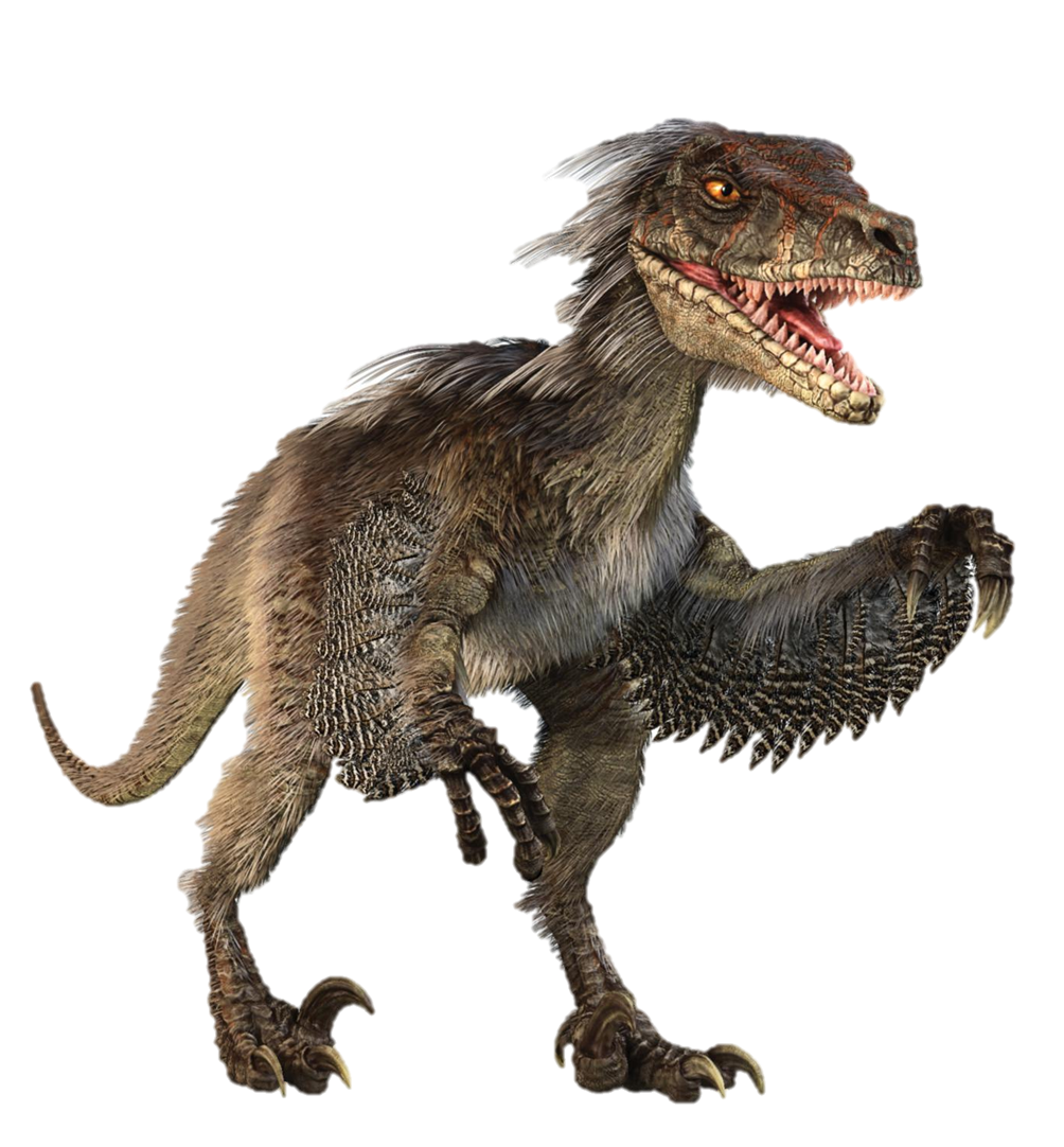 Learn about the velociraptor one of jurassic world 39 s main dinosaurs how it works - Dinosaure de jurassic park ...