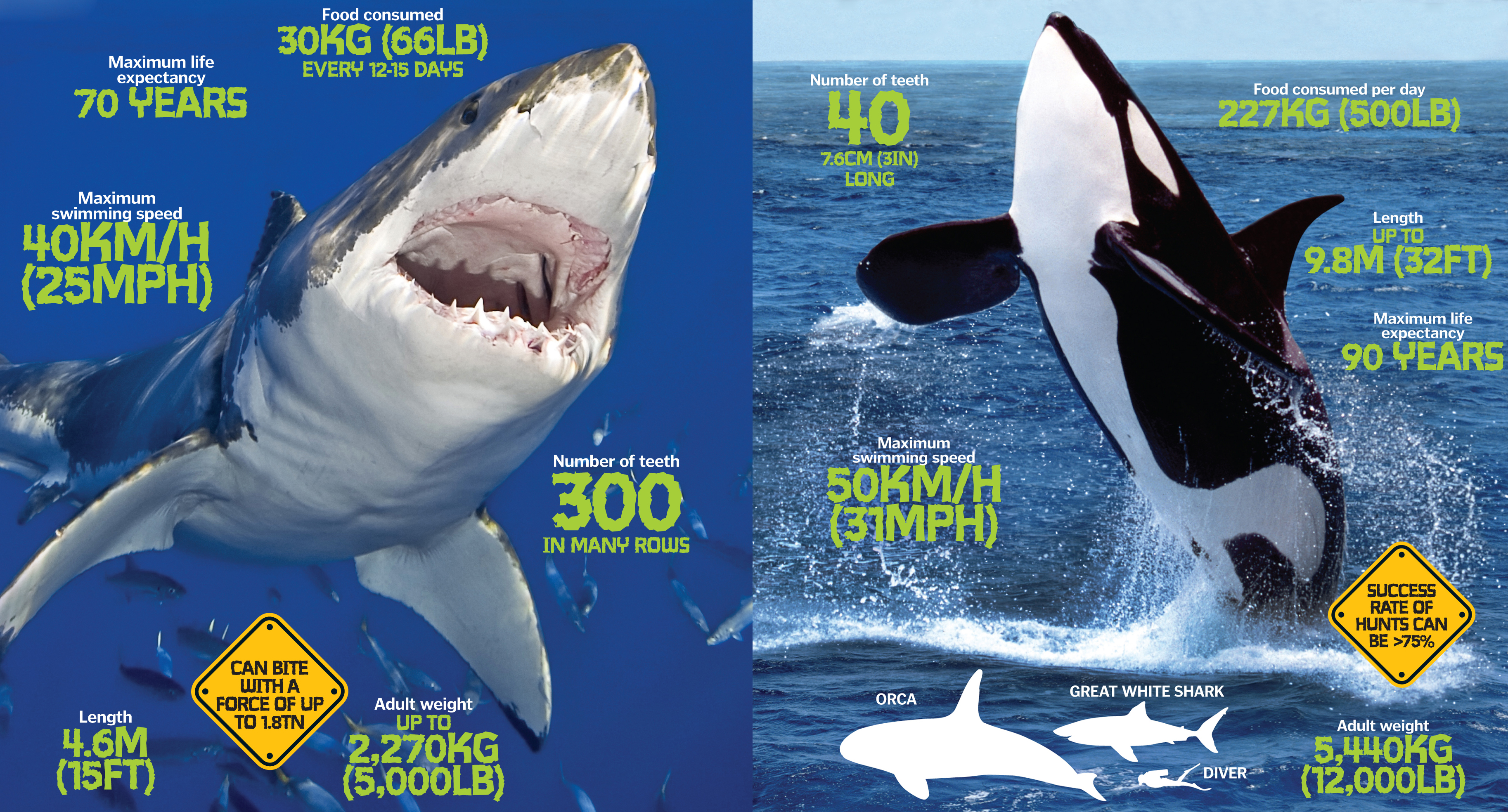 World's deadliest predators: The lethal animals that can kill in seconds | How It Works Magazine