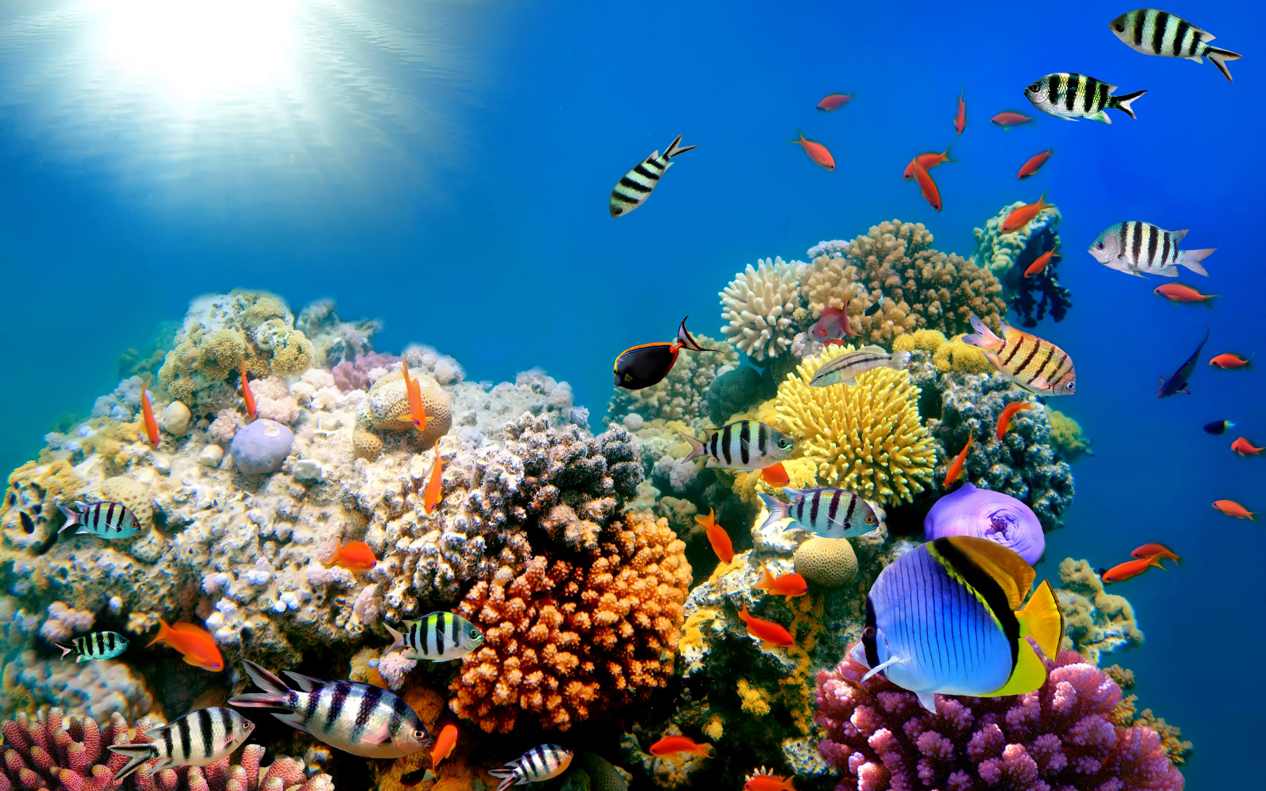 Coral reefs: Exploring the rainforest of the seas