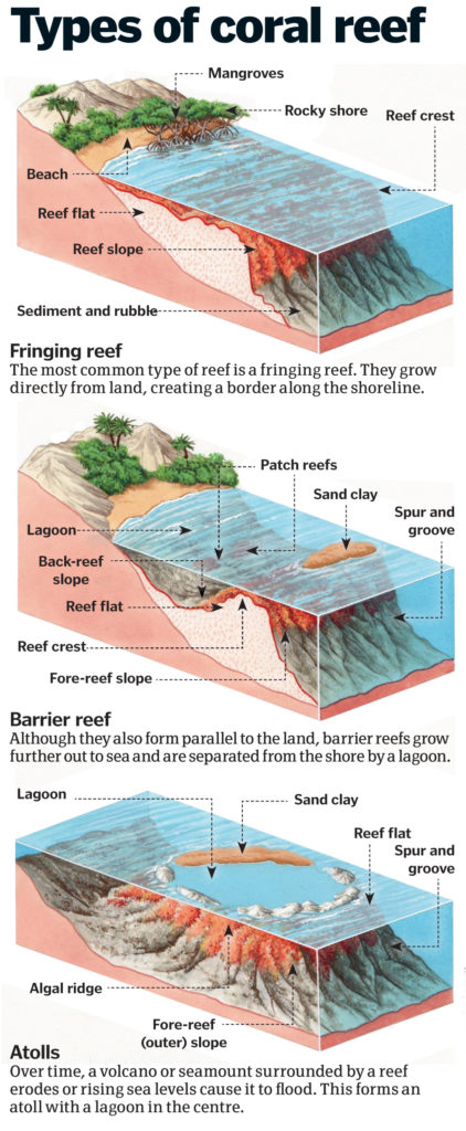 types of coral reef