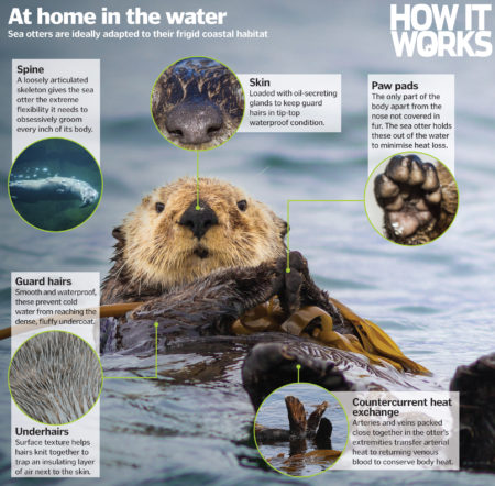 How do sea otters stay warm?